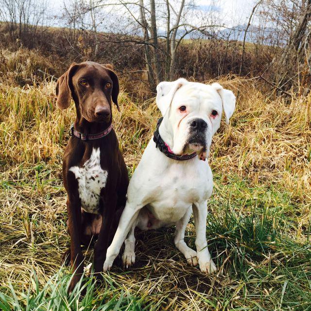Pasja druščina Majdi - psi naše Trgovine za male živali