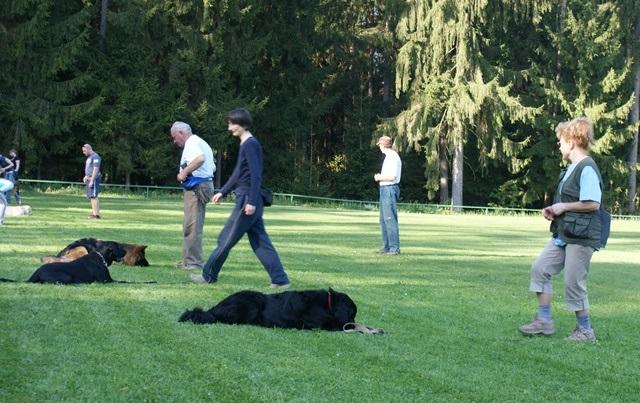 Pasja šola je naložba v psa za celo življenje!