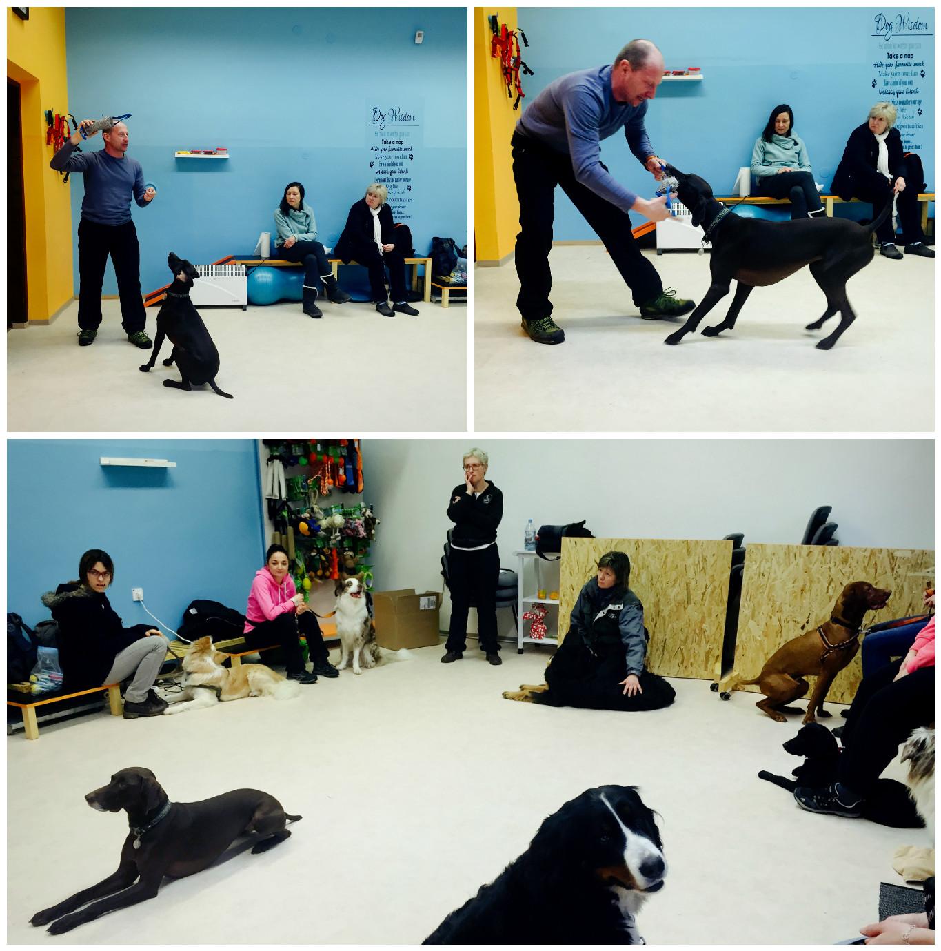Igra vodnik in pes – nadzirana in pravilna igra -  Pasja šola je vir pozitivnih izkušenj!